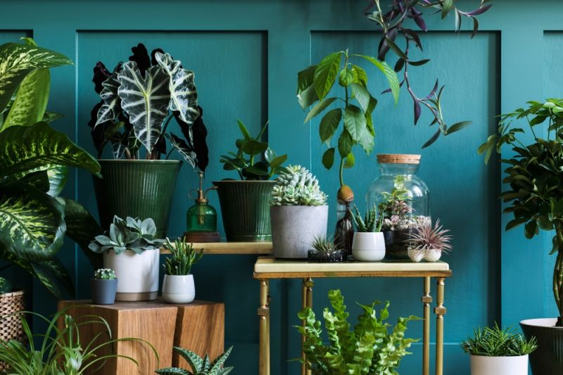 How to take care of house plants and tropical plants during winter?